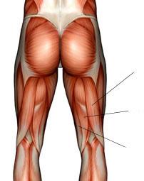 Какие суставы и работают при беге гипертрофия мышцы коленного сустава