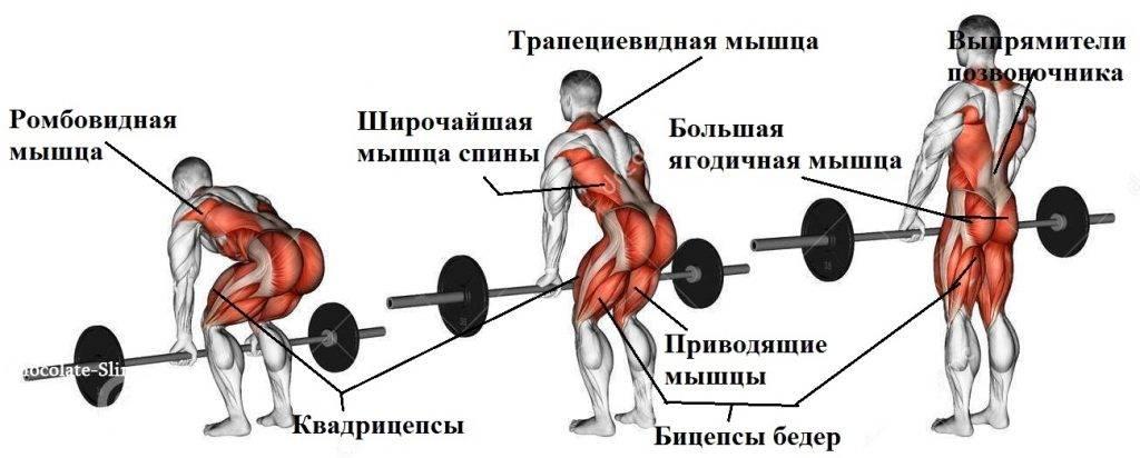 анатомия становой тяги