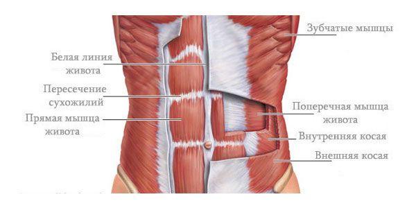 какие мышцы работают при вакууме живота