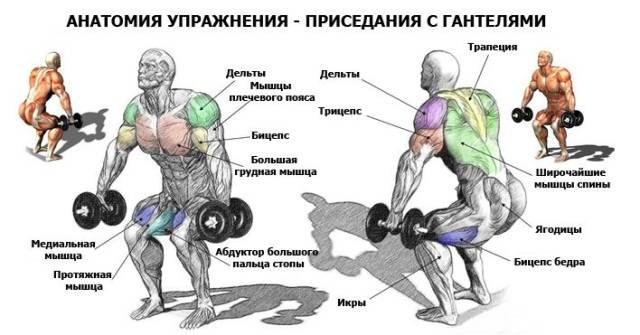 упражнения для приседания анатомия