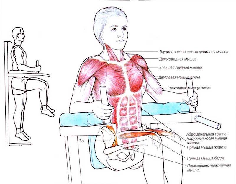 Работа мышц при подъеме ног